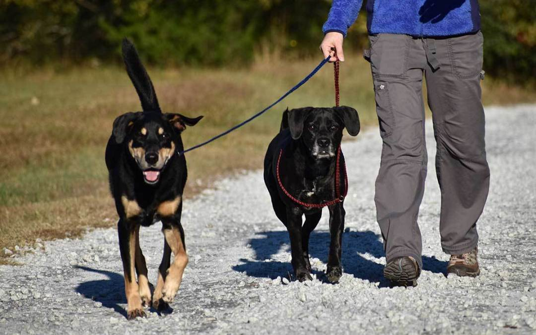 Benefits of a Great Dog Boarding Facility